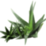 cosmetics-aloe-layer-2.png